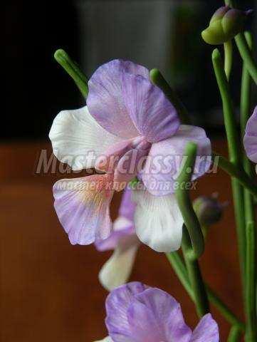 орхидея из холодного фарфора мастер-класс