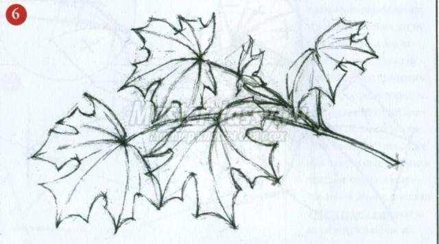 Рисунки карандашом листья на ветке