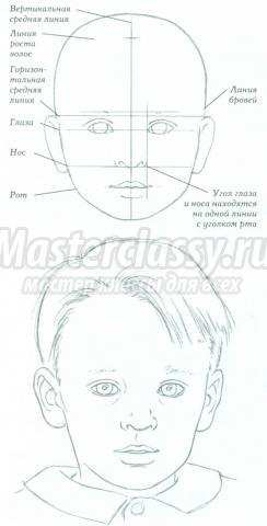 пропорции лица ребенка в рисовании